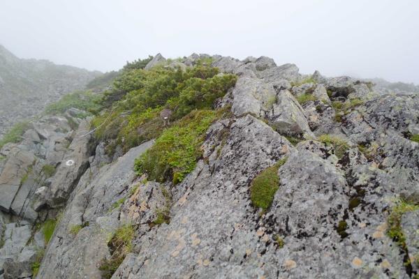 岩の陰にライチョウ
