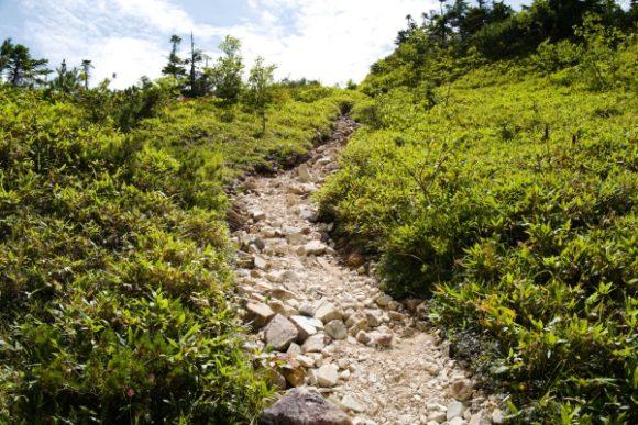 この坂道を下ってきた。