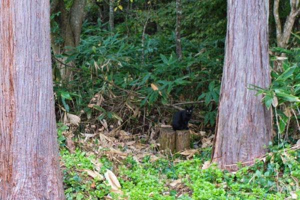 警戒心の強い黒猫