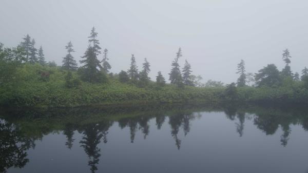 池に映るリフレクション