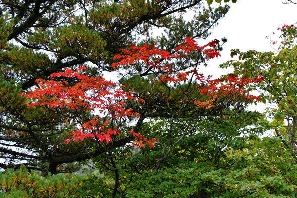 紅葉が美しい。