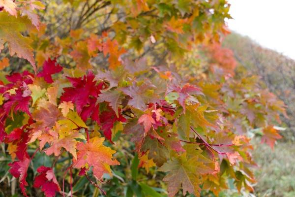 紅葉の色が濃くなる