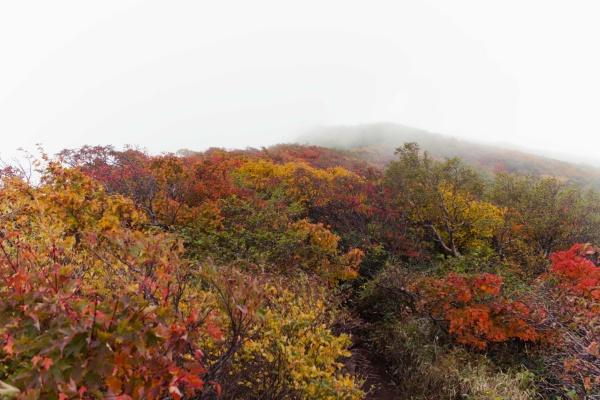 ええなぁ秋の山