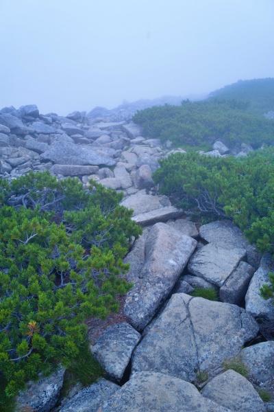 こんな岩を上がっていくのです。