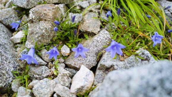 きつい登りこそ花を撮る!
