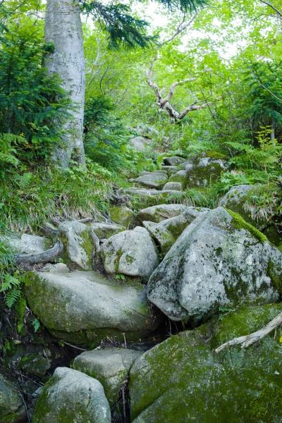 朝一でこの坂道はつらい。