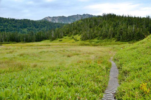 雰囲気の良い湿原です。