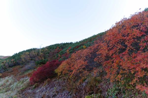 おはよう紅葉。